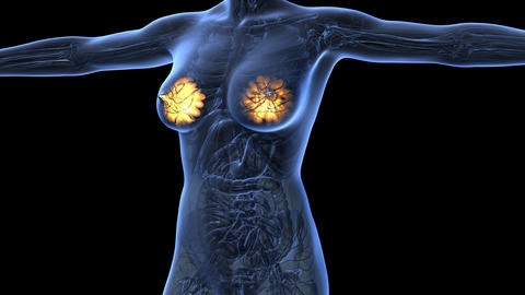 science anatomy of human body in x-ray with glow mammary gland on blue. alpha Animation