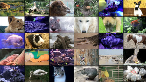 A variety of images of African Landscapes and Animals as a big image wall Live Action