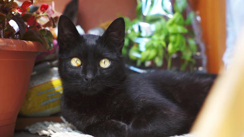 Cute curious black cat Live Action