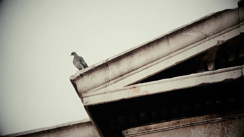 Ominous bird sitting on roof of old decaying building, horror film, bad omen Live Action