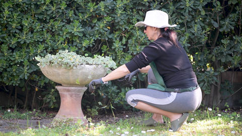 Woman working with flowers in the garden at home Live Action