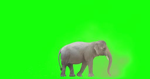 Asian Elephant Tossing Dirt CG動画