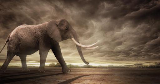 Majestic Elephant Walking Animation