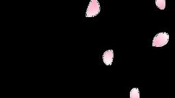 Sakura Flutter Side 03 Loop CG動画
