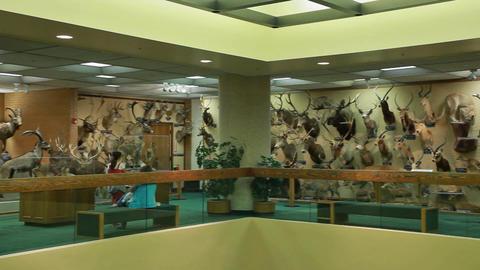 African wildlife display P HD 7276 Footage
