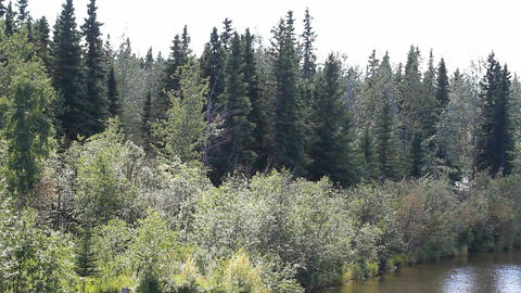 Alaska River shore forest from boat P HD 1485 Live Action