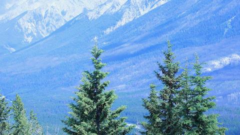 Banff Park Pine mountain P HD 7375 Footage