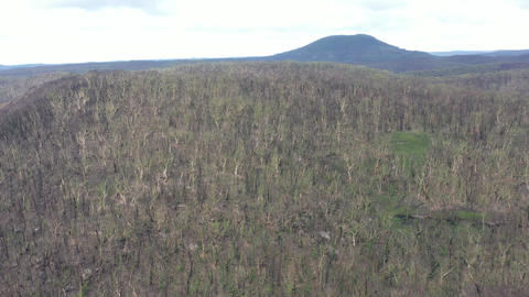 Aerial footage of forest regeneration after the Blue Mountains bush fires in Australia Live Action