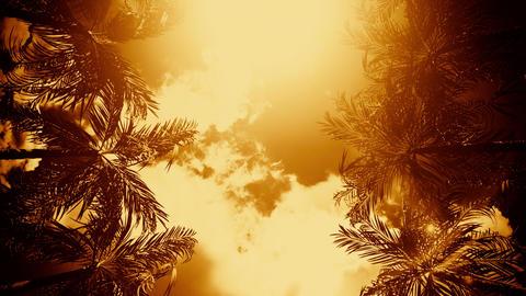 The Palms Avenue under an Orange Sunny Sky VJ Loop Background Animation
