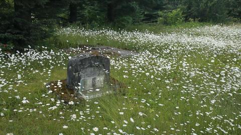 Cemetery daisy flowers headstone Alaska P HD 8415 Footage