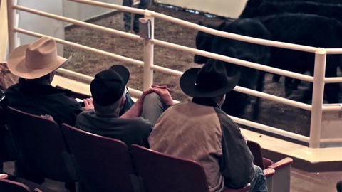 Cowboys and ranch buyers at cattle livestock auction HD 0295 Footage