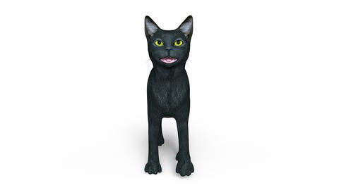 UHD CAT Walk CG動画