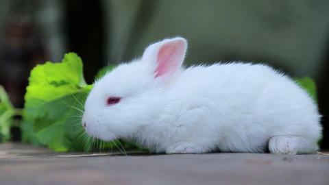 rabbit on green grass, white rabbit little rabbit, Little white bunny Live Action