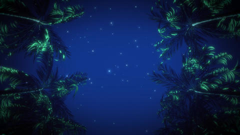 The Palms Avenue under a Starry Night Sky VJ Loop Background Animation