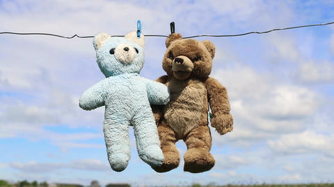 Faithful friends bears after washing, place for advertising text Live Action