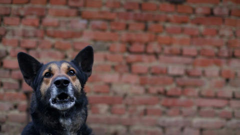 hungry dog, stupid dog, evil Live Action