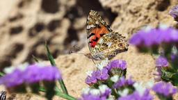 Butterflies 0