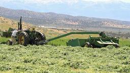 Farmer walking to tractor P HD 1055 Footage