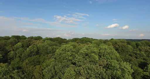 Aerial Horizontal View of Tree Tops Green Forest Live Action