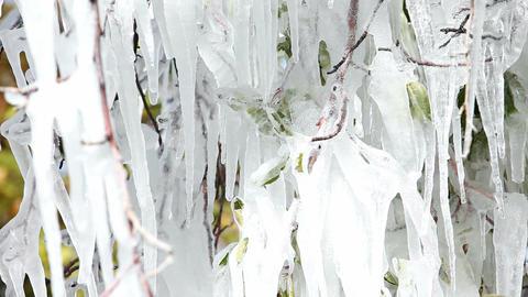 Ice on fruit tree P HD 8041 Footage