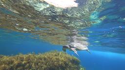 Sea Turtle 0