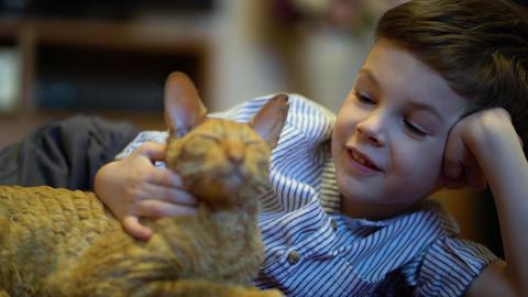 boy stroking a cat lying on a carpet GIF