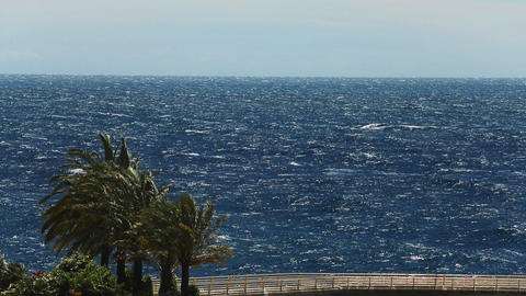 Seascape through palm trees, windy weather, wave of sea, nobody, view from Live Action