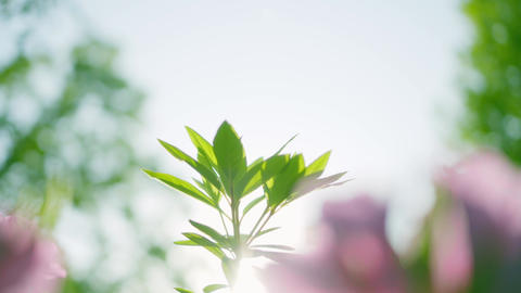 新緑と花 ライブ動画