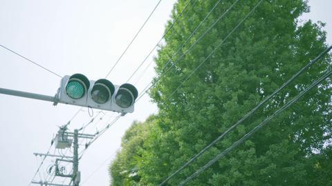 信号機と新緑 ライブ動画