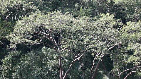 Jungle trees mountain Mexico P HD 4630 Footage