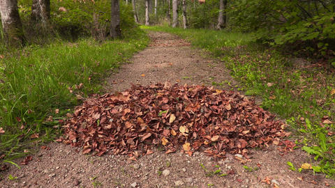 Autumn leaves falling on the leaves pile Footage