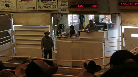 Livestock beef cattle auction and sale HD 0328 Footage