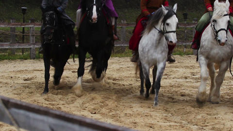 Medieval festival, demonstration of pedigreed horses with riders on their backs Footage