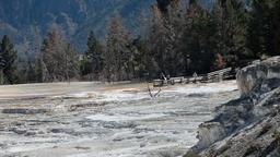 Mammoth Hot Springs cascades P HD 2481 Footage