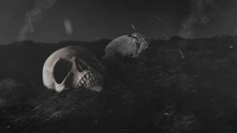 Black Crow Pecking a Human Skull in a Burning Field Live Action