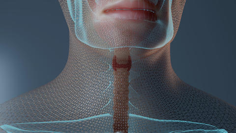 Thyroid function in human body animation Live Action