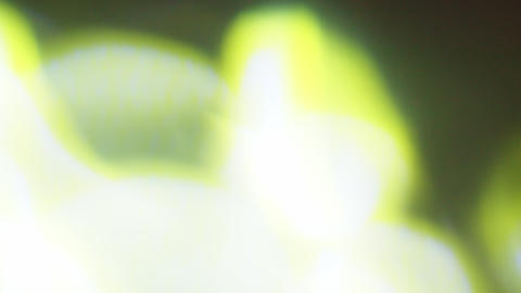 Green blobs of vintage light Live Action