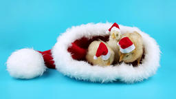 Three funny young roosters in red hats in the big Santas hat Footage