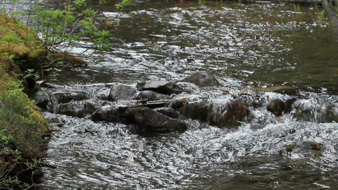 Mountain Stream P HD 1219 Live Action
