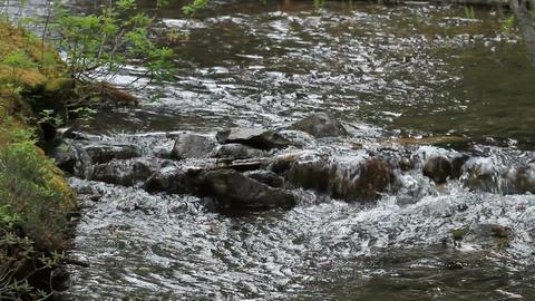 Mountain Stream P HD 1219 Footage