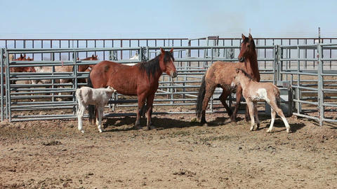 Mustang horse colt mare P HD 8888 Live Action