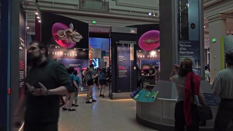Natural History Smithsonian Museum ocean people 4K 075 Stock Video Footage