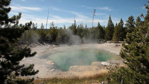 Norris Geyser Basin hot pool forest P HD 2497 Footage