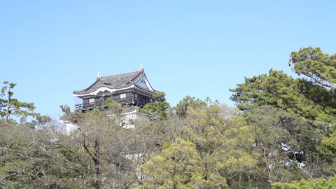 Okazaki Castle in spring with Cherry Blossoms Live Action