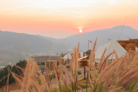 Wild spicas with mountains scenery sunset view