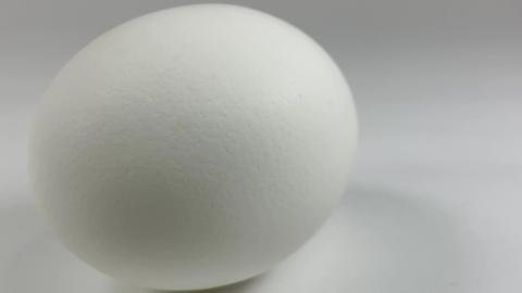 Chicken egg010 ライブ動画