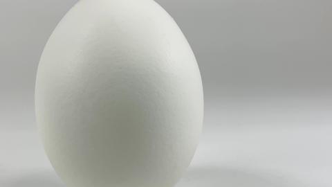 Chicken egg012 ライブ動画