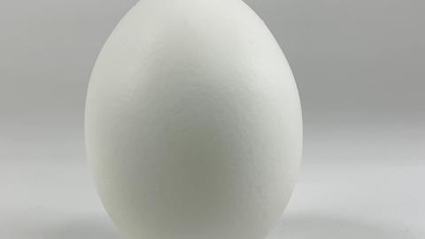 Chicken egg014 ライブ動画