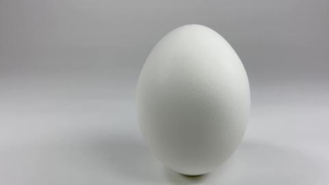Chicken egg005 ライブ動画