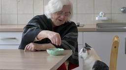 Old woman and cat Live Action